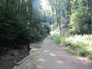 Path at last